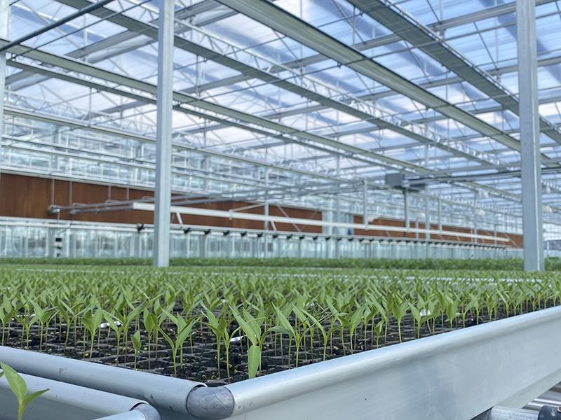 1glass greenhouse-axgreenhouse (5)