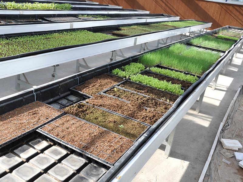 Hydroponics Seedling Nursery Tidal Seedbed Venlo Glass Greenhouse-PMV019