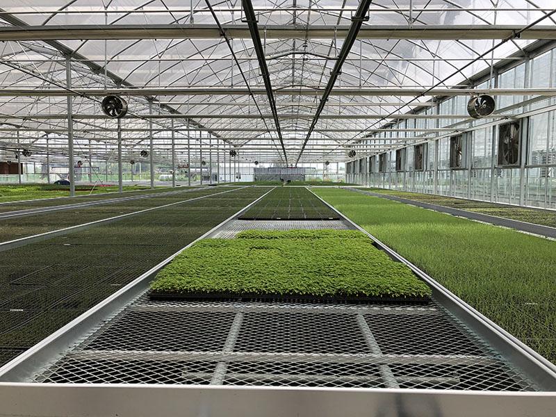Gothic glass-Po film combination greenhouse