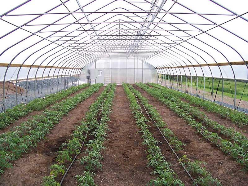 Gothic type greenhouse (1)