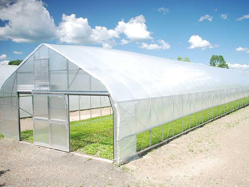 Gothic type greenhouse (4)