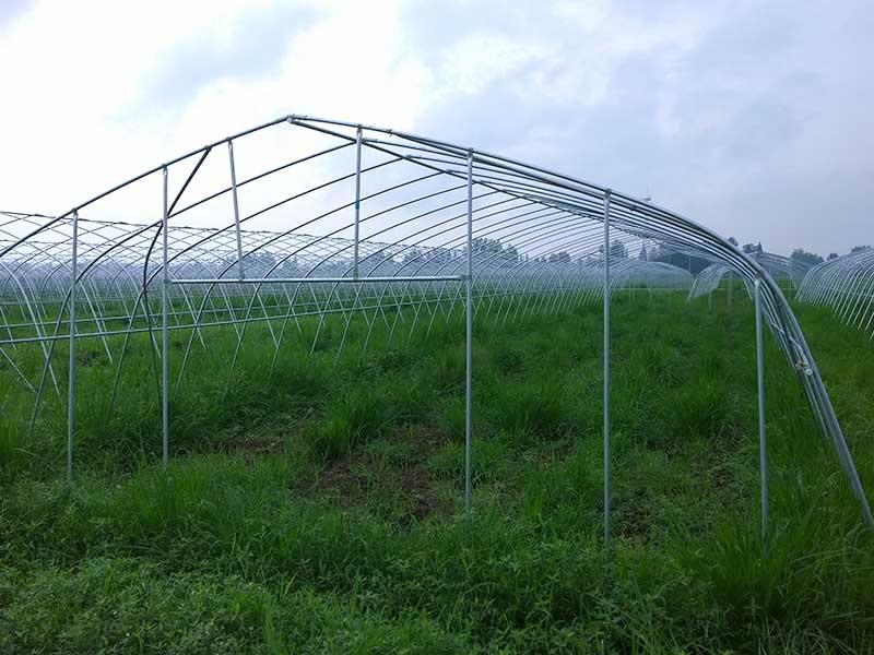 Gothic type greenhouse