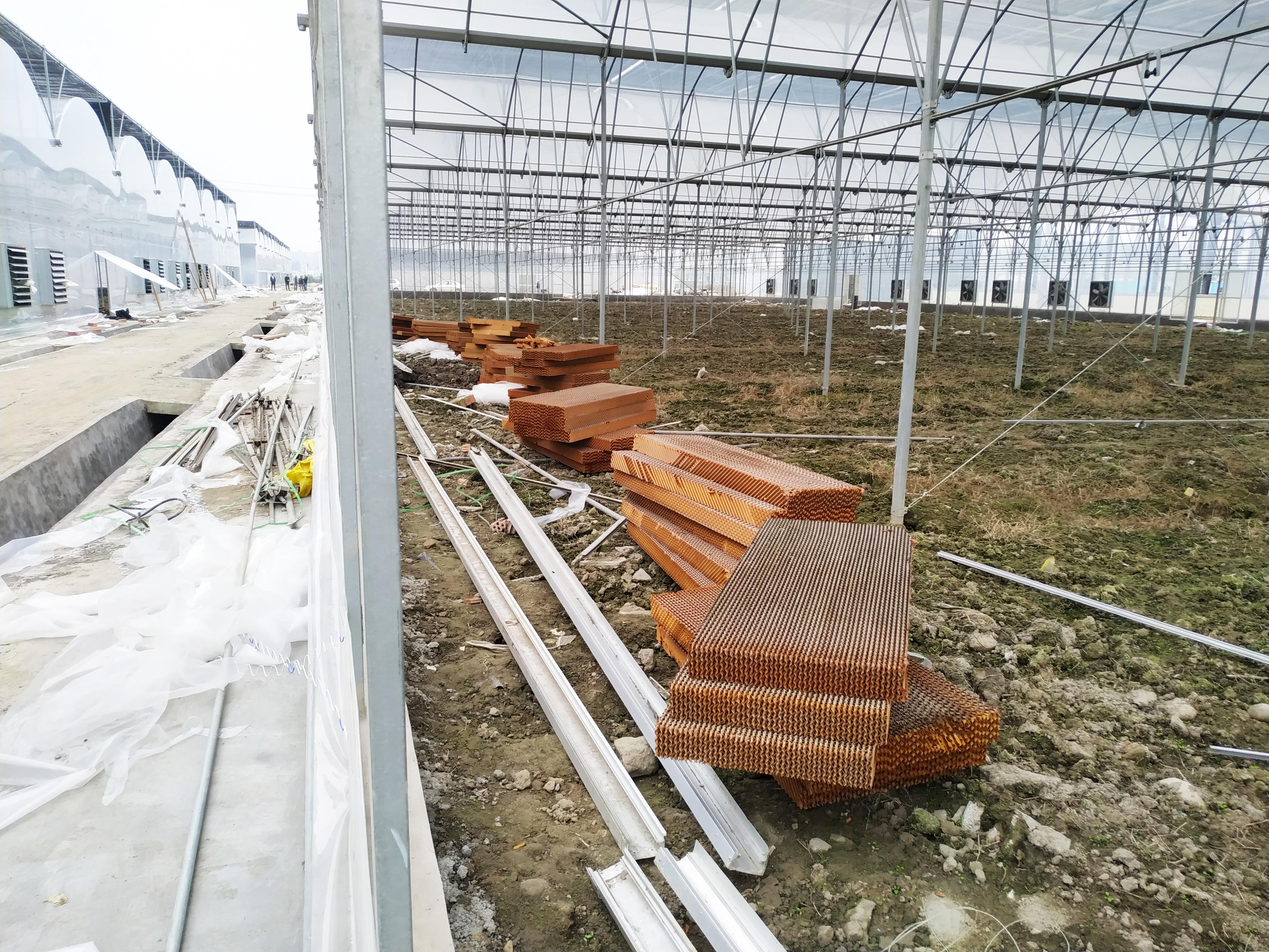 Multi-span Greenhouse (4)