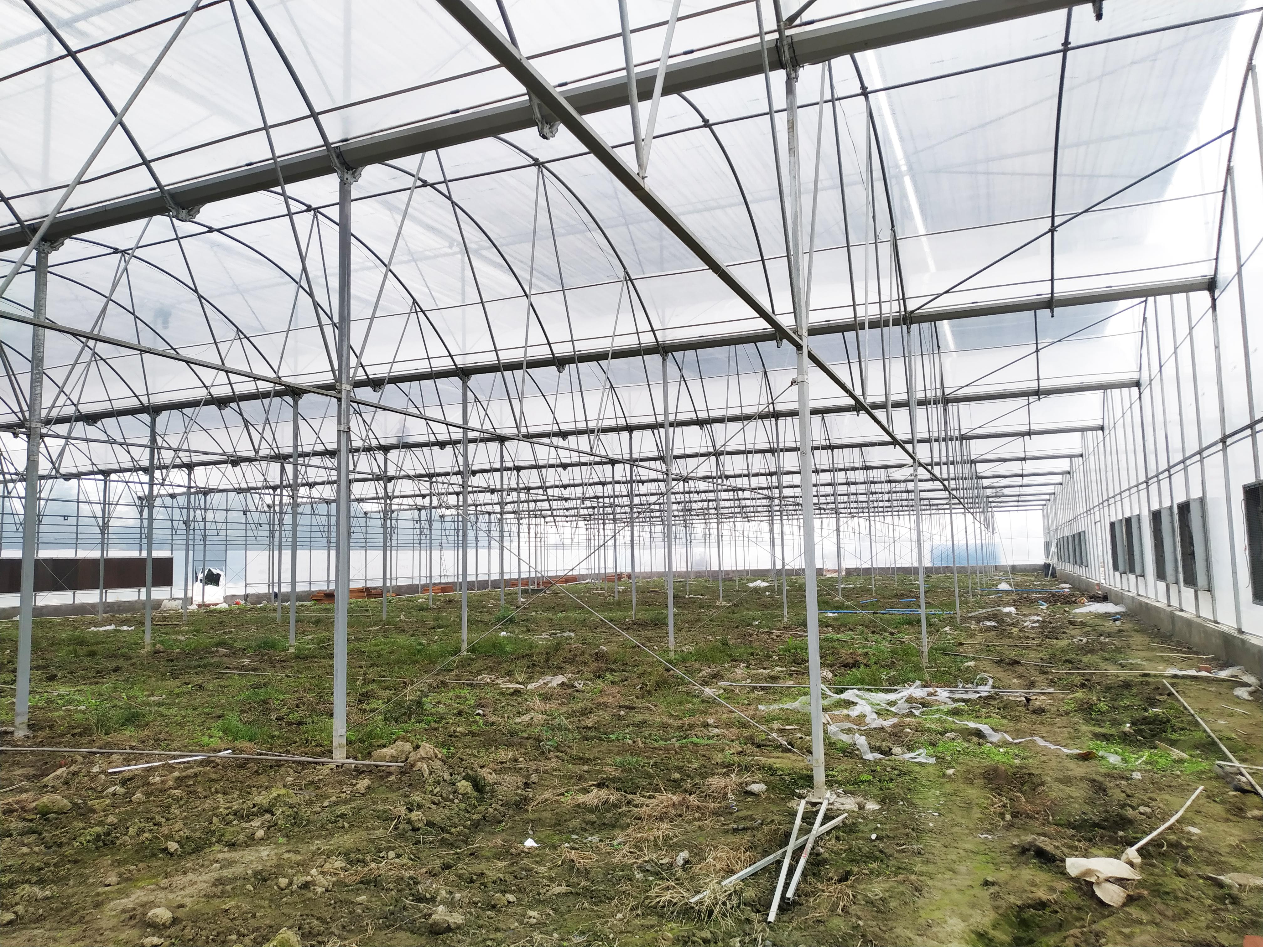 Multi-span Greenhouse (6)
