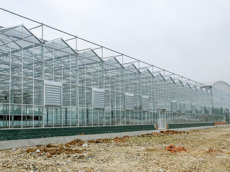 Venlo Style Glass Greenhouse