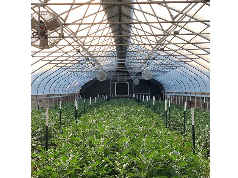 inside greenhouse1